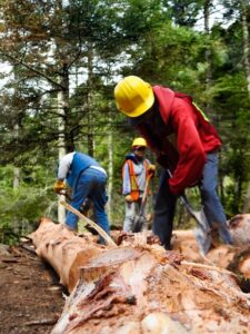 Deforestation in Mexico through workers logging