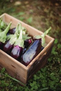 Eggplant - Food that Starts with E